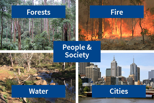 Five categories of research in the School of Ecosystem and Forest Science: Forests, Fire, Water, Cities, People and Society.